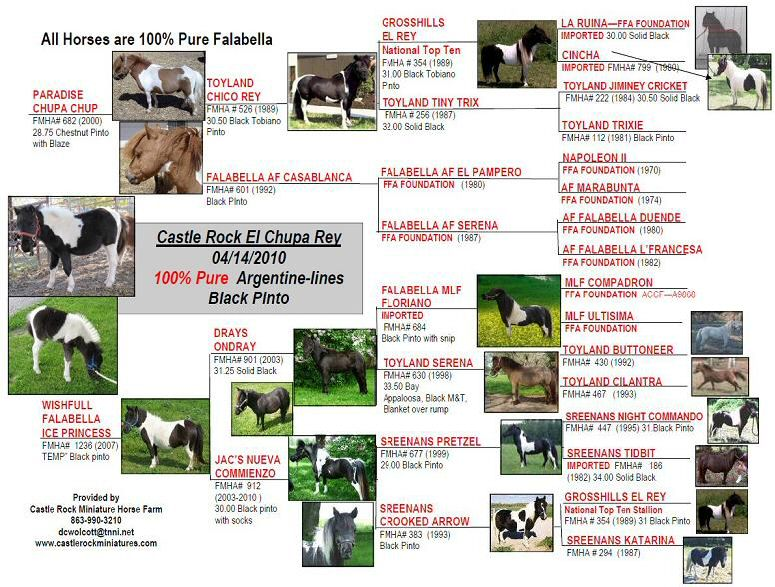 Pedigree of Wishfull Falabella Ice Princess